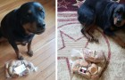 This Rottweiler always watches over the bread every time his family leaves the house