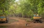 In Indien wurde dieser Tiger in der Nähe der Bulldozer verewigt, die seinen Wald zerstören