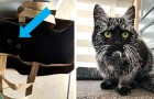 13 scatti memorabili di gatti neri mostrati in tutta la loro simpatia ed eleganza