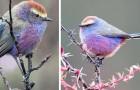 Video Vögelvideos Vögel