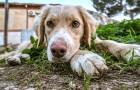 Coronavirus, l'appel des autorités et des organisations à ne pas abandonner les animaux : ils ne sont pas contagieux
