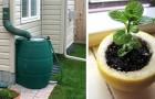 9 utili dritte di giardinaggio per prenderci cura al meglio dei nostri spazi verdi
