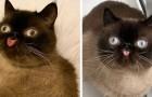 Ikiru, il gatto imbronciato che con le sue linguacce sembra disprezzarti in ogni momento