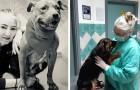 Covid-19, l'appel d'une vétérinaire :