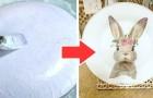 La tecnica semplice ed economica per realizzare un fantastico piatto decorato in occasione della Pasqua