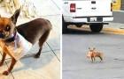 Een jongen in quarantaine stuurde zijn hond om chips te kopen in de winkel aan de overkant