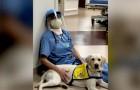 Wynn, il cane in corsia che a fine giornata conforta medici e infermieri che combattono contro il Covid-19