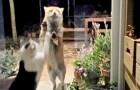 Video di Animali