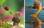 Le lumache sono creature speciali: in queste foto c'è tutta l'essenza del loro magico mondo in miniatura