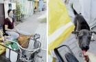 Um sie vor dem Hungertod zu retten, füttert diese junge Frau jeden Tag die herrenlosen Tiere in ihrer Stadt