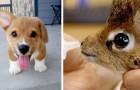 15 imágenes de animales muy tiernos capaces de hacernos volver la sonrisa en un instante