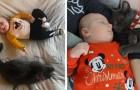 Al gatto non sono mai piaciute le coccole, ma cambia idea quando in casa arriva un bimbo appena nato