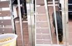 Il cane rimane solo perché il padrone è in quarantena: un vicino generoso gli porta del cibo ogni giorno