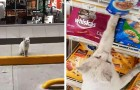 A kitten waits every day in front of the grocery store