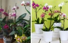 Orchids are wonderful indoor plants with a