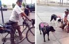 No meio de uma pandemia, um idoso leva comida para os cães de rua da cidade todos os dias: ele tem uma autorização das autoridades