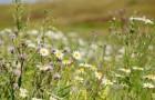 Avec les villes désertes, les fleurs et les plantes sauvages prolifèrent : elles pourraient nous aider à sauver les abeilles et la biodiversité