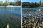 À Turin, les eaux du Pô redeviennent limpides : un autre effet de l'arrêt des activités humaines