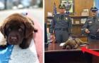 Este adorável cão policial não para de dormir, mesmo durante o seu juramento oficial