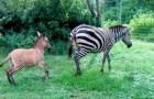 In Kenya è nato un cucciolo di