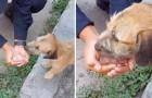 Een genereuze politieagent stopt de auto en geeft een zwerfhond te drinken die door de lege straten vanwege Covid liep