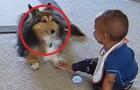 Se você tem dúvidas da importância de um animal na vida de uma criança, olhe este vídeo!