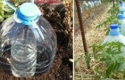 L'idea ingegnosa per irrigare riciclando bottiglie di plastica e usando poca acqua