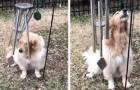 Ein sehr süße kleiner Hund