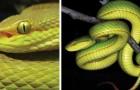 Vidéos de Serpents