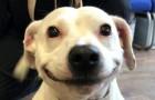 Den här hunden som verkar
