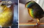Barry, der Kanarienvogel mit dem Helmschnitt: Sein urkomischer Blick bringt Tausende von Benutzern zum Lächeln
