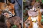 Een fotograaf legt de wilde dieren van de Finse bossen vast: zijn foto's omsluiten een magische wereld
