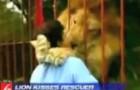 Una donna incontra il leone che aveva cresciuto molto tempo prima: la reazione dell'animale non ha prezzo