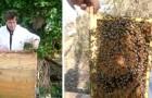 Ses abeilles n'avaient pas produit autant de miel depuis 20 ans : la cause, l'absence d'homme et la réduction de la pollution