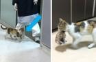 Een zwerfkat brengt haar kitten naar de eerste hulp en