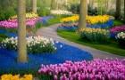 Het is een van de mooiste tuinen ter wereld: een fotograaf portretteert het in al zijn schoonheid tijdens de lockdown