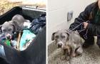 Een hond wordt in het afval gegooid en gescheiden van haar puppy's: misschien was ze betrokken bij een gevecht