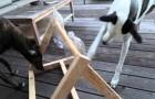 Hij maakt een logica spel voor zijn twee honden, maar het vrouwtje is te slim!