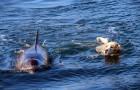 Een dolfijn gaat regelmatig zwemmen in deze kleine haven met een UITZONDERLIJKE reden