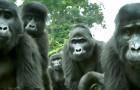 Dank eines Affenroboters können Wissenschaftler zum ersten Mal dem besonderen