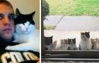 20 volte in cui i gatti hanno scelto i loro padroni senza lasciar loro alcuna alternativa