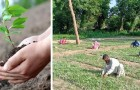 In Pakistan, chi ha perso il lavoro a causa del Covid-19 è assunto dallo Stato per piantare alberi