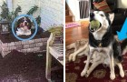 13 foto esilaranti di cani che hanno