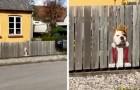 Der Hund schaut immer aus dem Loch im Zaun heraus: Zur Freude der Passanten malt das Frauchen zwei