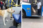 A dog loses his owner and gets on the bus everyday hoping he'll eventually find him