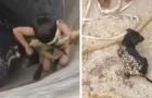 Um garoto corajoso desceu até o fundo de um poço para salvar um filhote de cachorro que estava se afogando