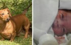A newborn baby was found and rescued from a manhole thanks to the insistent barking of a dachshund