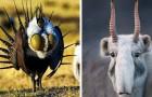12 dieren die moeder natuur zo bizar heeft willen maken dat ze onwerkelijk lijken