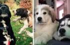 20 foto divertenti di cani a cui i padroni hanno