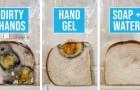 Das Experiment dieser Lehrerin zeigt deutlich, was es bedeutet, sich nicht die Hände zu waschen und dann das Brot anzufassen
